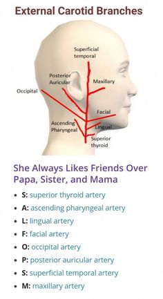 Branches of External Carotid Artery ... #NaturalRemediesHeartburn #PureGreenCoffeeExtractWeightLoss Daily Health Tips, Health And Fitness Tips, Health Advice, Medical Coding, Medical Technology, Technology Careers, Technology Innovations, Technology Articles, Medical Science