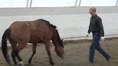 See how ground work translates to the saddle. 'Ground Work'- Priceless Horse Training