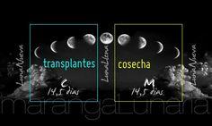 Fases de la luna , siembra y cosecha