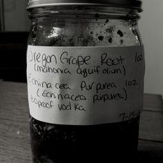 """Oregon grape root and echinacea """"antibiotic"""" tincture"""