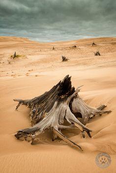 Dunes, Silver Lake State Park, Michigan.  Photo: Mark Graf
