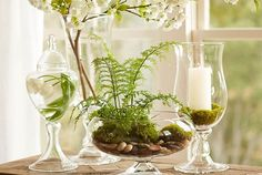 Glass Vessels by Pottery Barn