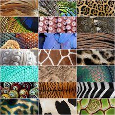 structuur en kleur dieren XL