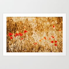 field of Poppies/Mohnfeld Art Print Promoters - $16.12