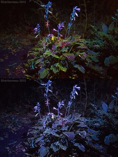 Here are two photographs showing two different white balance standards I use…