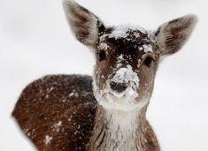 snow- kissed!