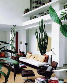 Cactussen blijven leuk. Daarnaast zijn ze ook heel makkelijk in omgang, want je hoeft ze weinig…