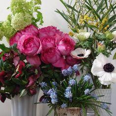 awesome vancouver florist #yvespiaget#muscari#mimosa#anemone#helleborus#christmasrose#viburnum#gardenrosespringflowers#pinkflowers#fragranceflower by @florieadesign  #vancouverflorist #vancouverflorist #vancouverwedding #vancouverweddingdosanddonts