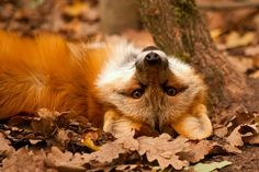 tittle fox being naughty up side down... or just mocking me! ;P