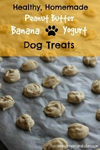 Crayons and Collars – Life with Kids and Pets Homemade Peanut Butter, Banana and Yogurt Dog Treats Puppy Treats, Diy Dog Treats, Healthy Dog Treats, Organic Dog Treats, Horse Treats, Healthy Food, Dog Biscuit Recipes, Dog Treat Recipes, Dog Food Recipes
