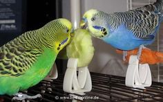 They love celery so technically they will eat your veggies   Community Post: 10 Reasons Why Budgies Are The Best
