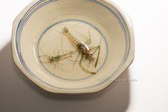 Chai Soong Ng Octagonal bowl with shrimp (Acrylic on Resin)