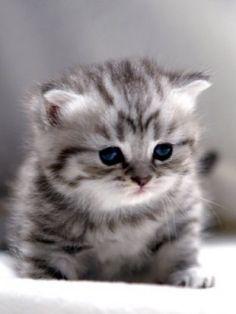 hình nền mèo con đáng yêu - Tìm với Google