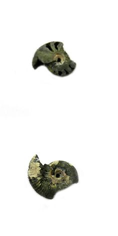 Ammonite 181078: 1Pcs Rare Product 18Mm Russian Pyrite Ammonite Fossil Jewelry Gemstone Gs00839 -> BUY IT NOW ONLY: $33.03 on eBay!