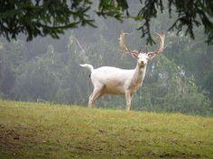 In da Heh: Mama, wann geh'n ma wieder moi aufs Maisenkögerl? Goats, Animals, Nature, Garten, Animales, Animaux, Animais, Goat, Animal