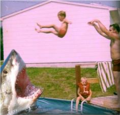 Shark attack!