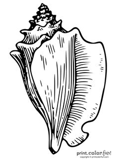 Color in this drawing of a conch shell — the big spiral shell of an ocean creature. Regular version: Low-ink printable: