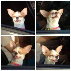 When you put your head out of the window and get a big waft of yucky smell.