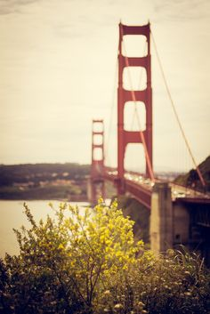 Golden Gate Bridge #travel #california