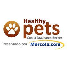 Mocha, el hamster de 123 años de edad comiendo brócoli. http://mascotas.mercola.com/sitios/mascotas/archivo/2014/09/20/hamster-comiendo-brocoli.aspx