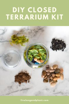 A fun activity with the kids, our DIY Closed Terrarium Kit will bring smiles to all who participate in the fun! Each kit includes a houseplant and supplies to create your masterpiece. Diy Terrarium Kit, Cactus Terrarium, Closed Terrarium Plants, Drought Tolerant Plants, Plant Pictures, Cool Diy Projects, Gardening For Beginners, Succulents Garden, House Plants