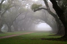 If you visit us on a foggy morning you might see a site like this! #OakAlley