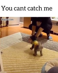 You cant catch me - H. - You cant catch me - Animal Jokes, Funny Animal Memes, Cute Funny Animals, Cute Baby Animals, Funny Cute, Animals And Pets, Hilarious Memes, Baby Animals Pictures, Cute Animal Pictures