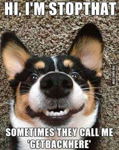 Funny dog meme joke pictures #dogsfunny #funnydogs #dogsfunnyjokes #DogObedience