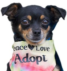 Peace of Mind Dog Rescue - A Grey Muzzle grant helps pay for medical expenses for senior dogs, and also supports the Helping Paw Program, which helps keep senior dogs with their owners.