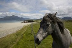 Connemara pony by the sea in Ireland - Ireland Made Easy can help you find places like this!