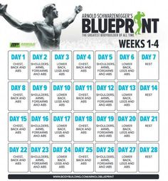 Going to use the Arnold blueprint and musclepharm workouts next month to try and bulk up a bit Arnold Schwarzenegger Training, Arnold Schwarzenegger Bodybuilding, Bodybuilding Training, Bodybuilding Workouts, Arnold Bodybuilding, Bodybuilding Plan, Workout Schedule For Men, Weekly Workout Plans, 8 Week Workout Plan