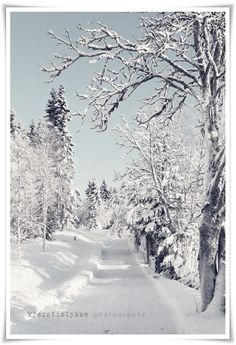 Kjersti {happiness}: Winter