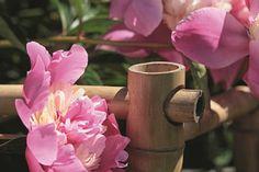 Eine Stütze aus Bambus gibt der Pfingstrose Halt.©  #LVBuch   #Garten #Pfingstrose  http://paulineshouse.com/april-mai-juni-garten-pfingstrose-100-gartenprojekte/
