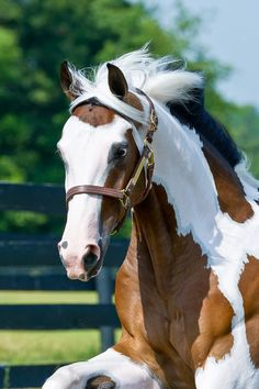 Horses are one of the animals closest to us. We have selected for you the best horses. We share with you the best horses photos in this photo gallery.