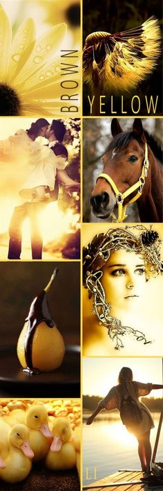 Brown + Yellow, by Lu's Inspiration ღ