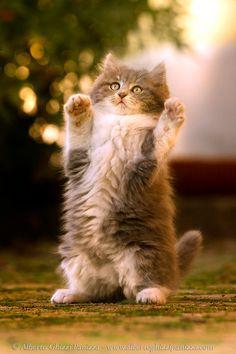 Happy kitten by Alberto Ghizzi Panizza - Photo 54141020 / 500px