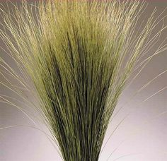 Dried Dune Grass really catches the eye.  From drieddecor.com