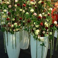 Výstava Flora Holland Trade 2013