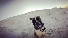 Max enjoying the snow beneath his feet and the wibd between his...