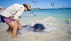 _DSC8013 Western Australia, Tourism, Surfing, Coast, River, World, Photography, Turismo, Photograph