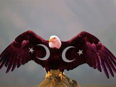Kartal Resimli Türk Bayrakları Cute Love Wallpapers, Turkish Army, Bald Eagle, Walt Disney, Istanbul, Flag, Culture, Bird, Country
