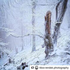 Rozprávková zima v Malých Karpatoch  #praveslovenske od ......... @tibor.rendek.photography  Carpathian winter