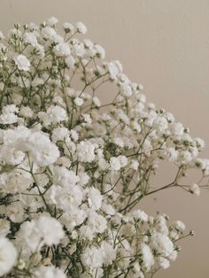 flowers, plants, and white image White Flowers, Beautiful Flowers, White Tulips, Images Esthétiques, Image Nature, Goddess Of Love, Gypsophila, Brown Aesthetic, Flower Aesthetic