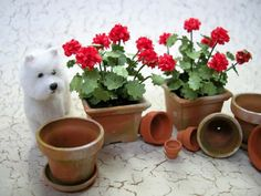 Mini Flower Pots & Westie