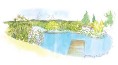 Style Council Exterior Designers bring life to space and space to life. Here is the sketch design that became the wetland pond at Nooitgedaght Eco Village in CapeTown. It attracts insects, birds and creatures to the space and becomes part of the eco restoration vision by Quentin Owen for the space. The park is situated in the Stellenbosch Biosphere Reserve