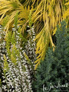 """From le jardinet. I can't wait for the book, """"Fine Foliage."""""""