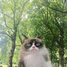 (Foto: Grumpy Cat/Divulgação)