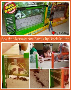 Uncle+Milton+Ant+Farms+Fascinate+Children+of+all+Ages
