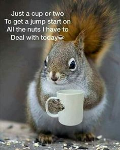 40 Funny Memes & Coffee Quotes That Prove Our Caffeine Addiction Is Real – Joanne Grenfell - Baby Animals Animals And Pets, Baby Animals, Funny Animals, Cute Animals, Wild Animals, Tierischer Humor, Work Humor, Cute Squirrel, Squirrels