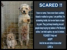 Please adopt and don't shop. Shut down the puppy mills. Educate people that don't know. The puppies get out but usually die shortly after due to preventable illness. And the adult females, the moms, never get out. Rescue Dogs, Animal Rescue, Animals And Pets, Cute Animals, Stop Animal Cruelty, Puppy Mills, Animal Welfare, My Heart Is Breaking, Pet Store